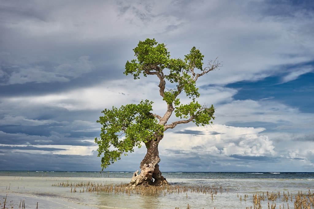 wodne-drzewo.jpg