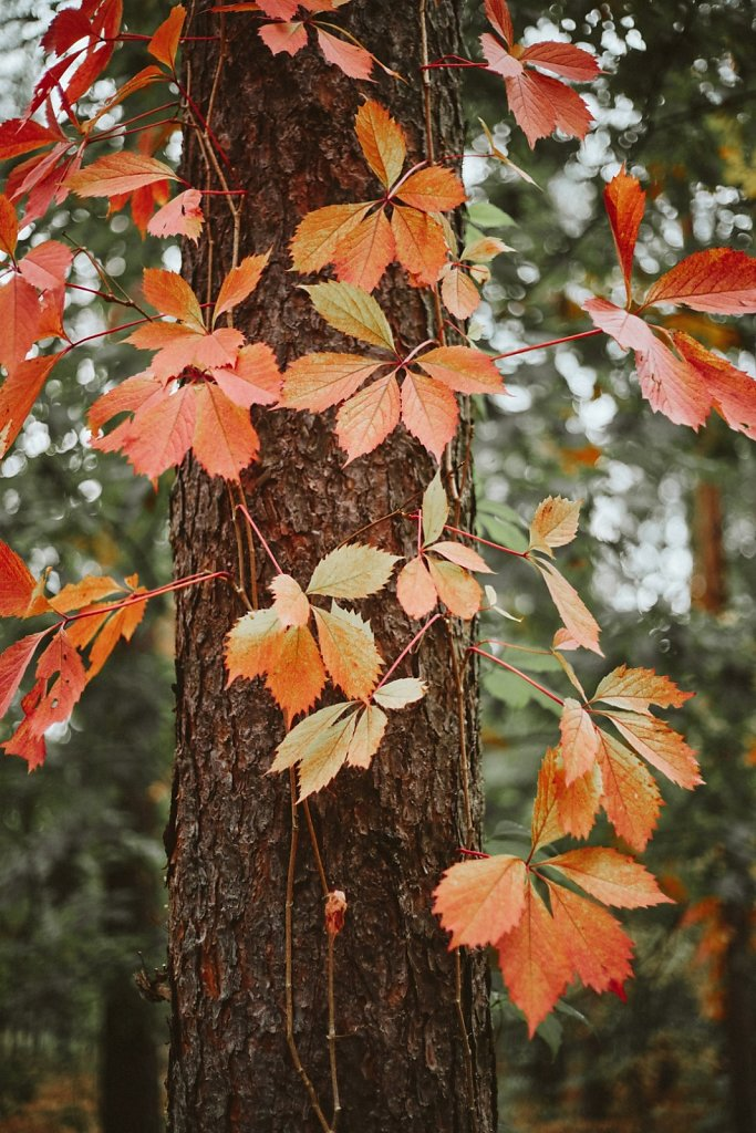 Sesja-slubna-w-lesie-018.jpg