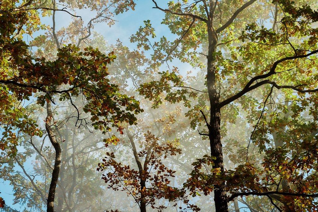 Sesja ślubna - Jesienią w słońcu, w stylu boho