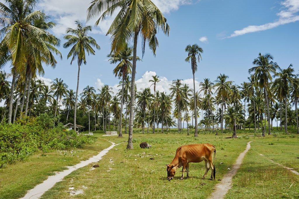 krowa-pod-palma.jpg